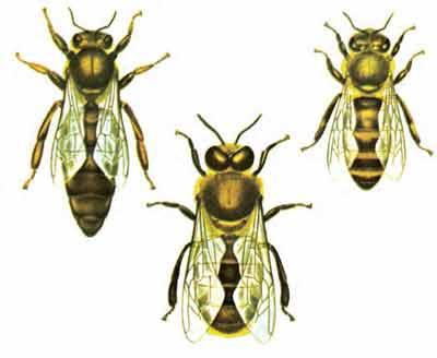 زنبوردای5