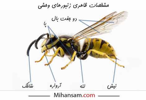 زنبور بدن