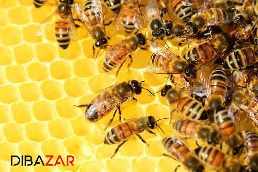 کلونی زنبور